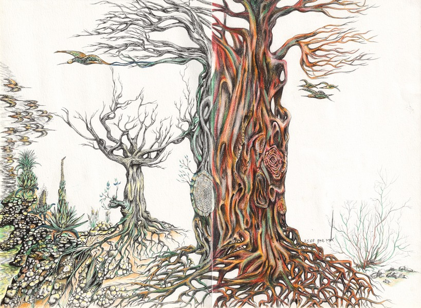 Field Tree  H 70 cm x W 52 cm Colored Pencils & Ink